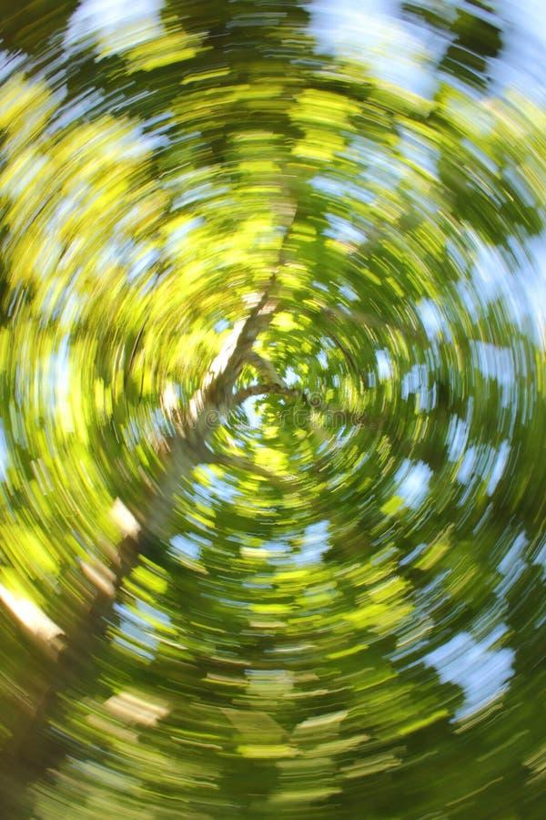 Wirbelnder Eukalyptus lizenzfreie stockfotos