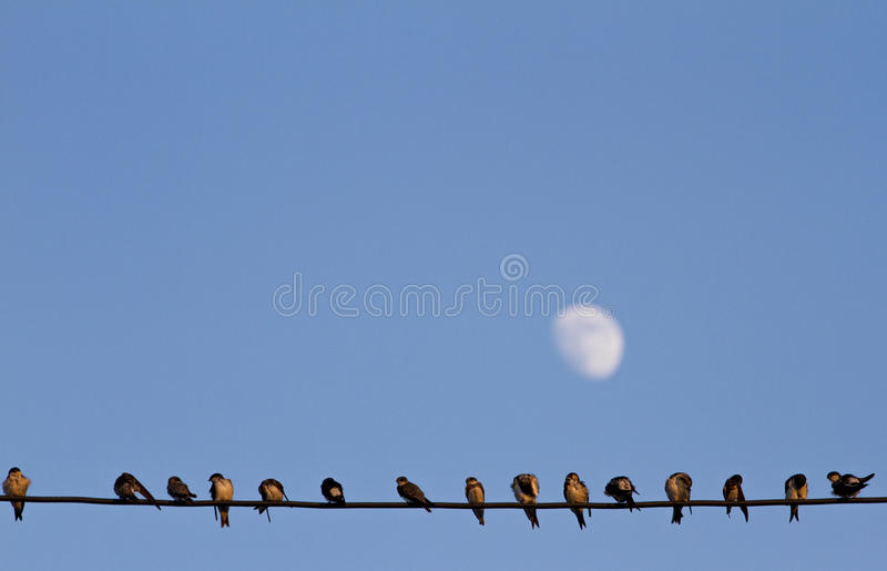 Lined-up birds on wire stock photo