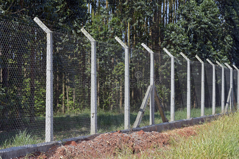 Wire Mesh Fence To Protect Planting Eucalyptus Stock Image