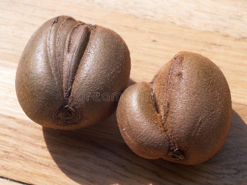Wired kiwi fruit with shiny sides stock image