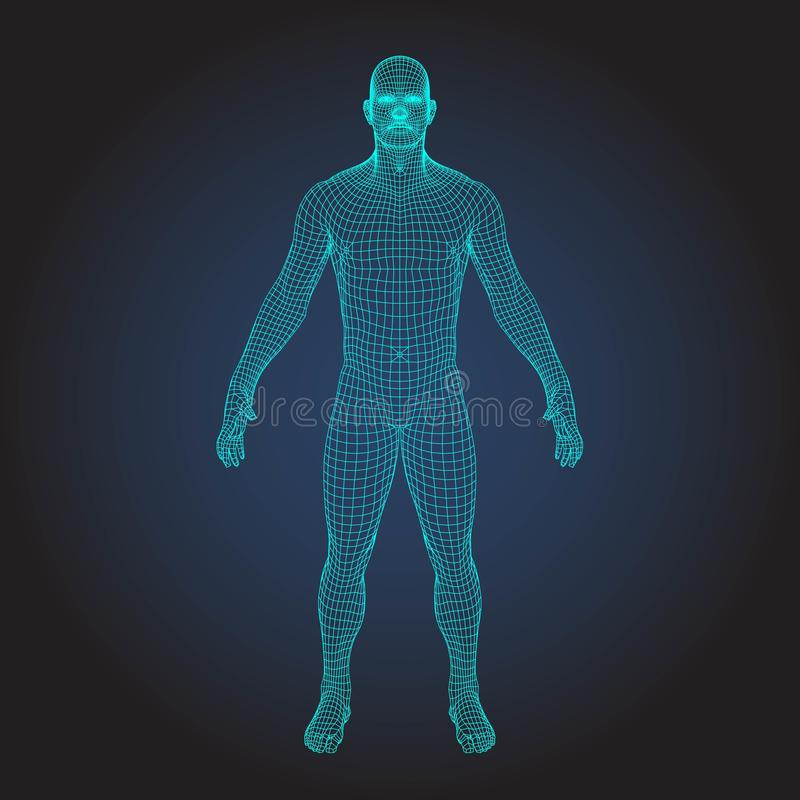 wireframe 3D menschlicher Körper vektor abbildung