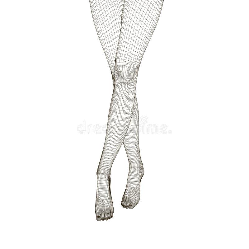 Wireframe nik?e krzy?owa? kobiet nogi Frontowy widok Poligonalna kobieta i?? na piechot? 3D r?wnie? zwr?ci? corel ilustracji wekt royalty ilustracja