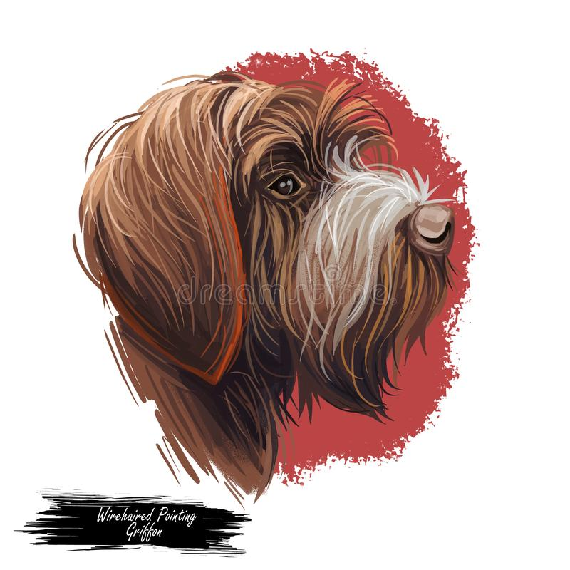 Wirehaired Pointing or Korthals Griffon dog breed portrait isolated on white. Digital art illustration, animal watercolor drawing royalty free illustration