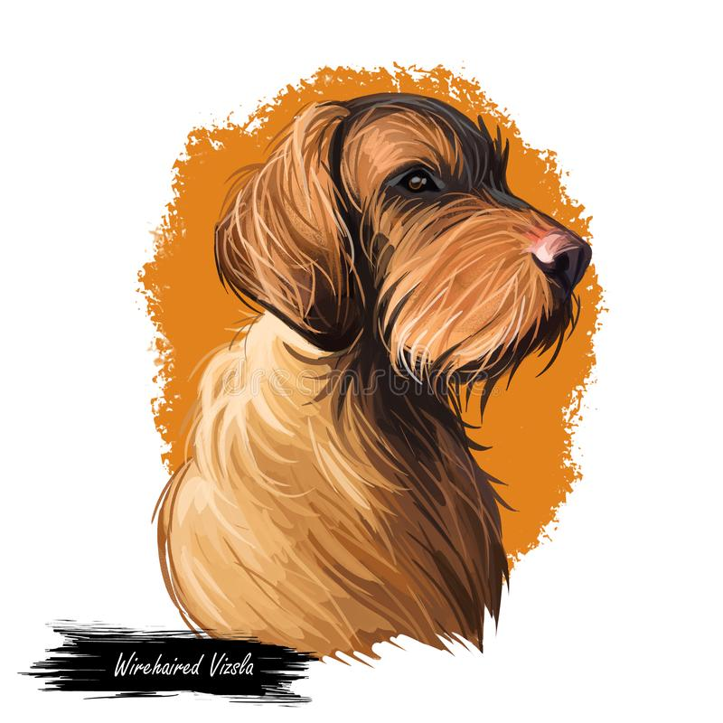 Wirehaired Vizsla dog breed portrait isolated on white. Digital art illustration, animal watercolor drawing of hand drawn doggy stock illustration