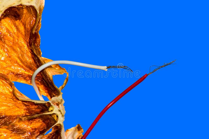 Wires stick out of dried orange is macro. Artificial food concept royalty free stock image