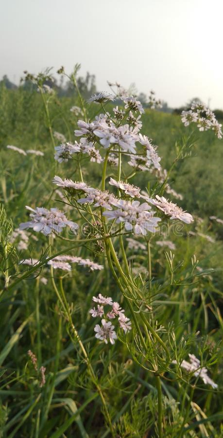 Wirklich schöne kleine Blumen auf den Gebieten lizenzfreies stockfoto
