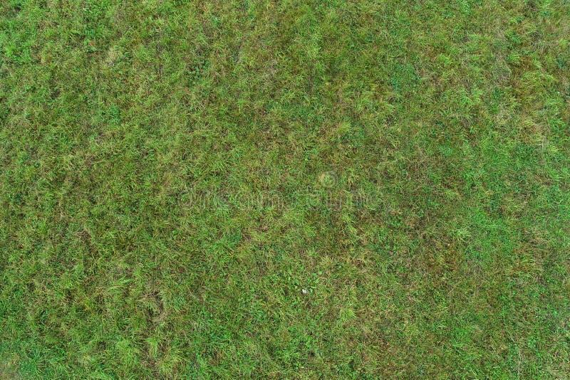 Wirklicher gr?ner Beschaffenheitshintergrund eines Grases stockbilder