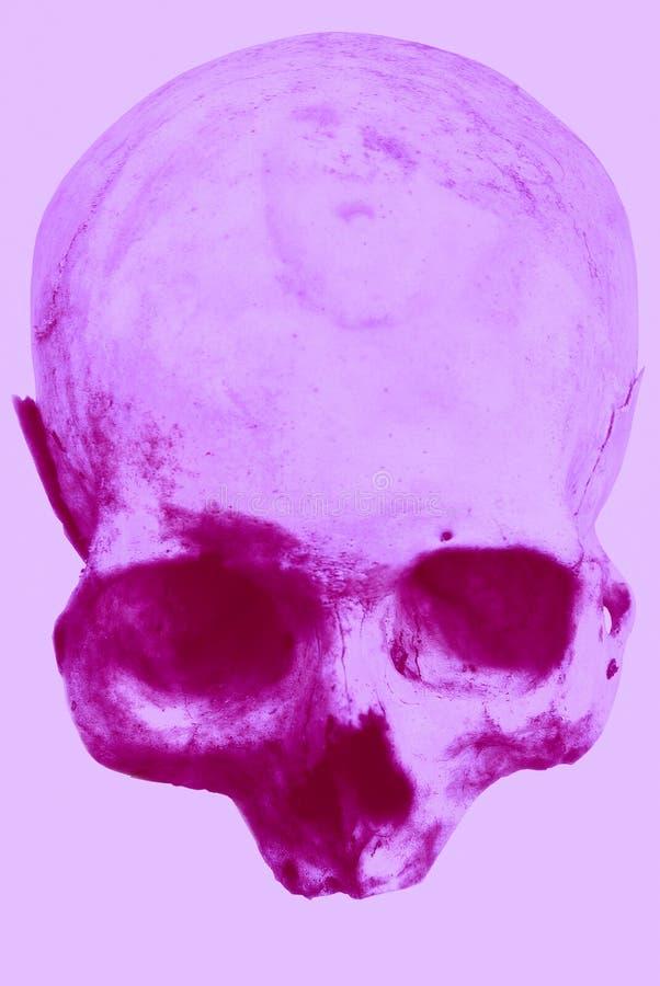 Wirklicher menschlicher Schädel auf einem lokalisierten weißen Hintergrund lizenzfreie stockfotos
