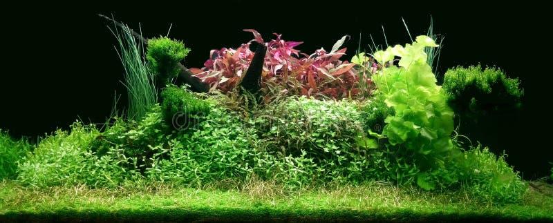 Wirkliches Aquascape in 300 Litern Aquarium stockfotografie