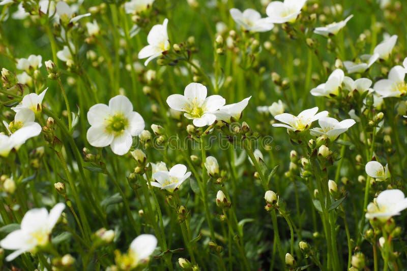 Wirklichkeitsfrühlingssommerflora-Pflanze-Energieplaneten-Erdgrüne grenze des Schönheitsnaturinspirationsbetrachtungsrestes wirkl lizenzfreie stockbilder