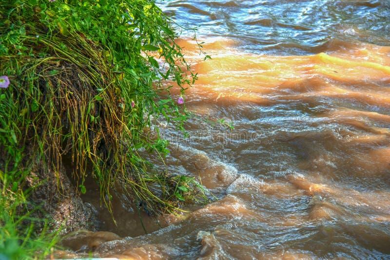 Wirować brudną wodę w zalewającym rzecznym podcina banku z kwiatami i trawą spada w wodę zdjęcie stock