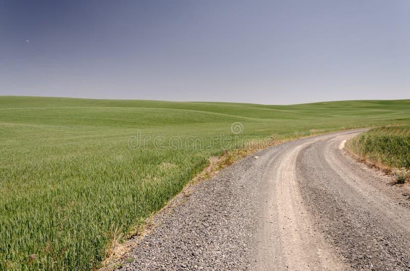 ?wiru drogowy kr?cenie z pszenicznymi polami obraz royalty free