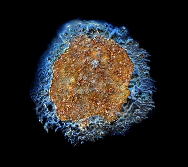wirus zdjęcie stock