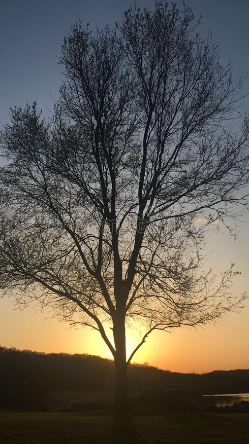 Wisconsin lake side sunset. This tree provides shade in the summer, but as the tree begins budding in the spring it creates a magnificent view with the sunset stock photo