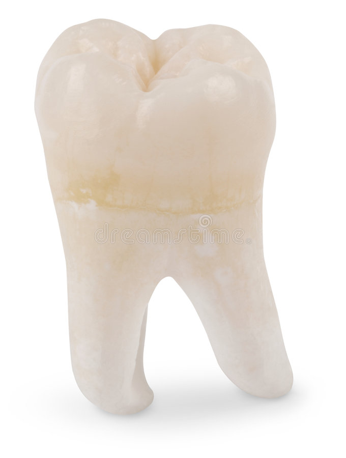 Free Wisdom Tooth Royalty Free Stock Photography - 4244507
