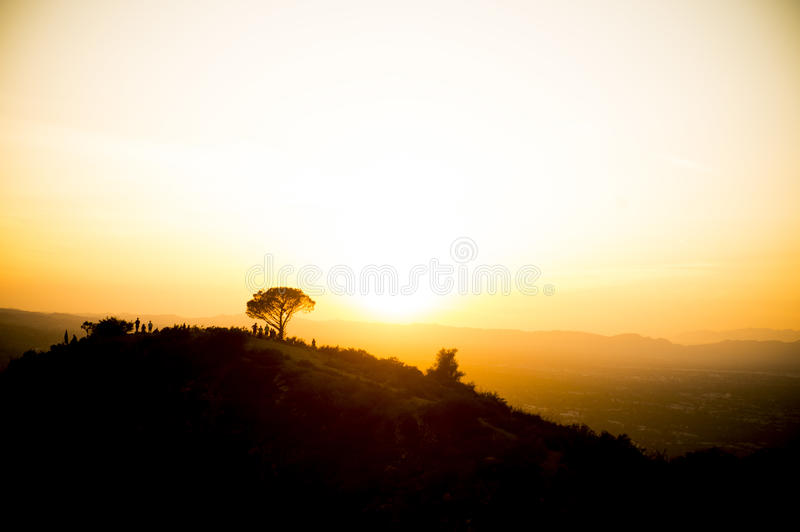 Wisdom Tree Sunset. The wisdom tree in Hollywood, CA. Taken from a helicopter over the Hollywood Hills stock images