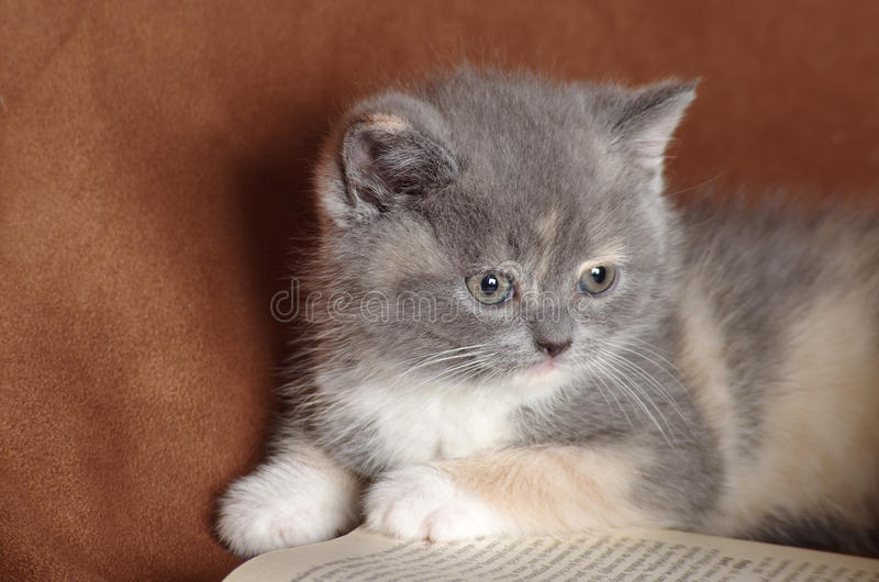 A wise kitten cat student stock image
