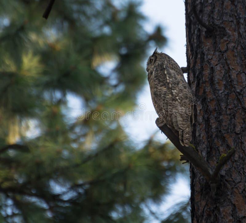 Wise owl stock image