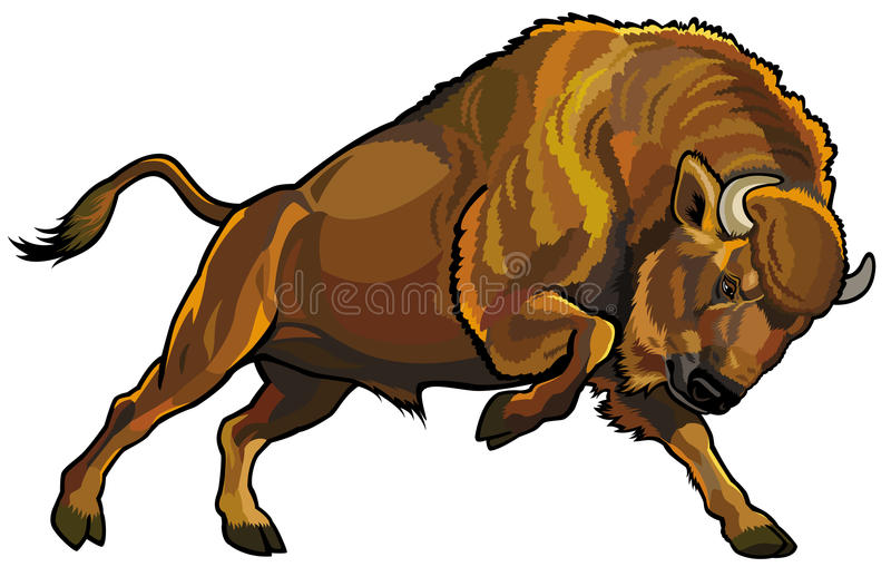 Download Wisent stock vector. Illustration of male, background - 30631956