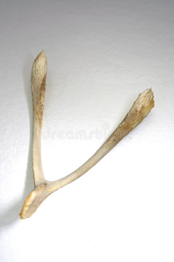 Wishbone stockbild