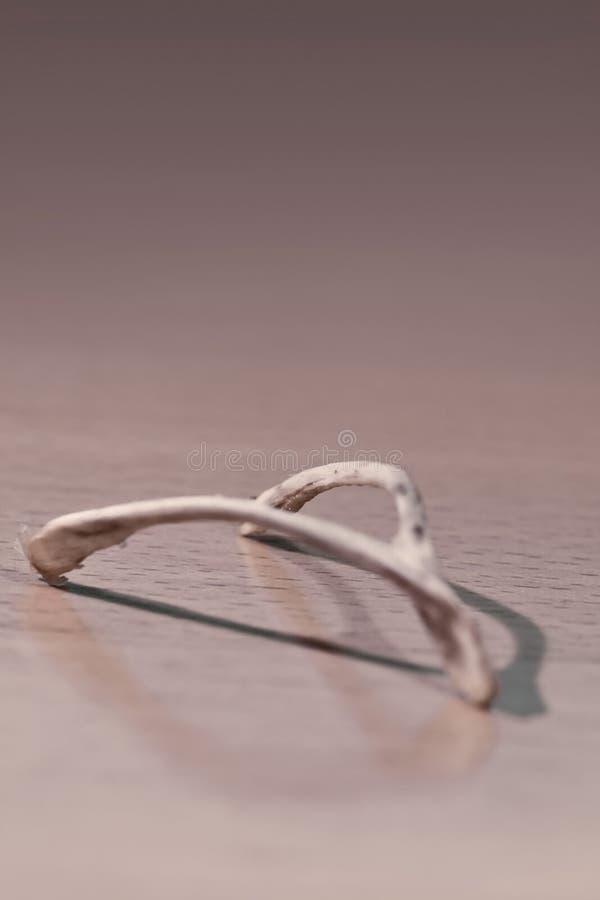 Wishbone lizenzfreies stockfoto