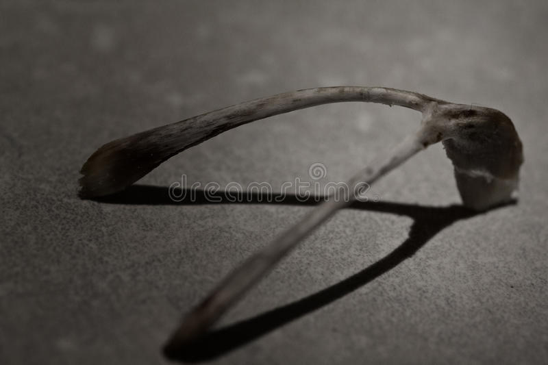 Bad luck wishbone stock image  Image of superstition - 11492003