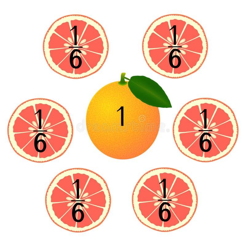 Wiskundige spelen voor kinderen Bestudeer de fractiesaantallen, voorbeeld met van een grapefruit stock illustratie