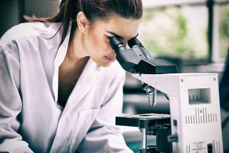 Wissenschaftler, der ein Mikroskop untersucht lizenzfreies stockfoto