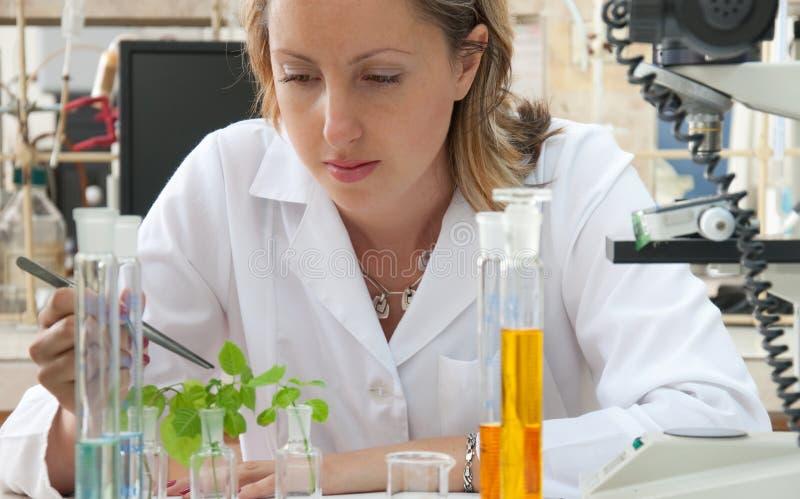 Wissenschaftler, der eine Grünpflanze erforscht stockfotografie