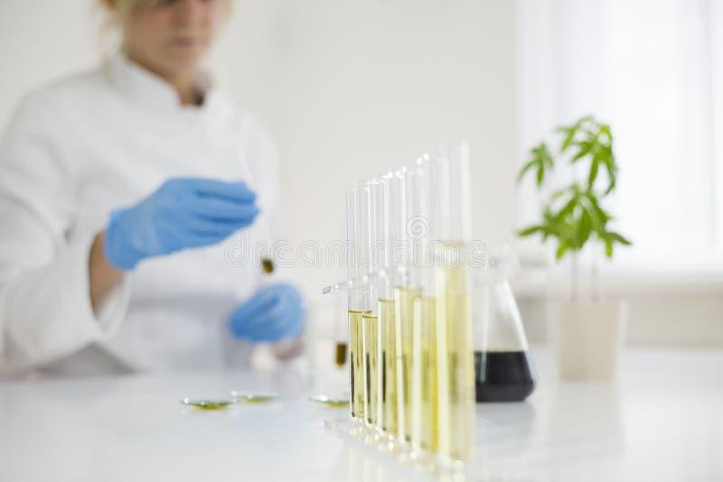 Wissenschaftler, der mit pharmazeutischem cbd Öl in einem Labor mit einer Glasausrüstung arbeitet stockbild