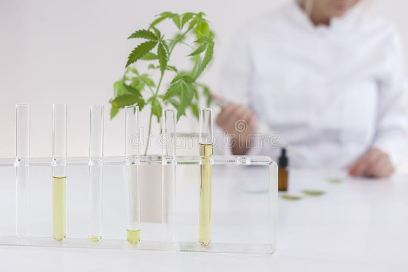 Wissenschaftler, der mit pharmazeutischem cbd Öl in einem Labor mit einer Glasausrüstung arbeitet stockfotografie