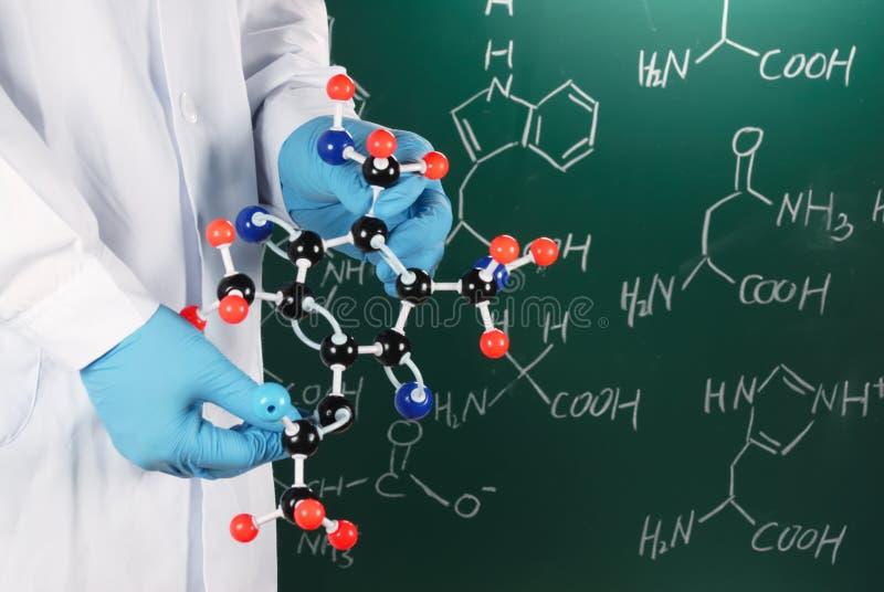 Wissenschaftler, der molekulares Baumuster zeigt stockbild
