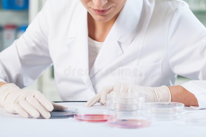 Wissenschaftler, der Petrischalen überprüft lizenzfreie stockfotografie