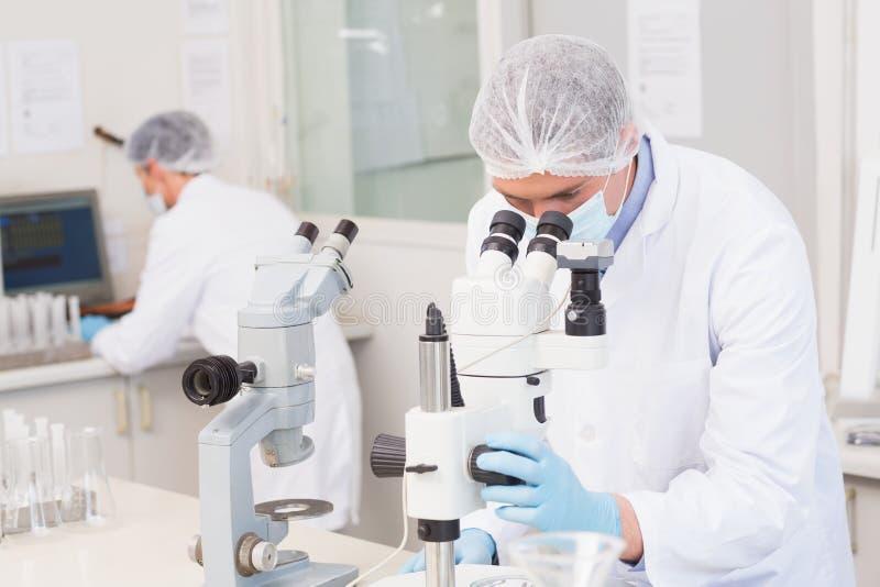 Wissenschaftler, die aufmerksam mit Mikroskopen arbeiten stockfotos