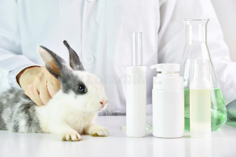 Wissenschaftlerprüfung auf Kaninchentier im chemischen Labor lizenzfreies stockfoto