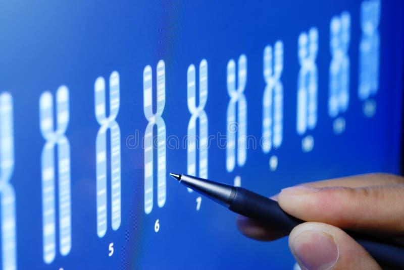 Wissenschaftsforschung lizenzfreies stockfoto