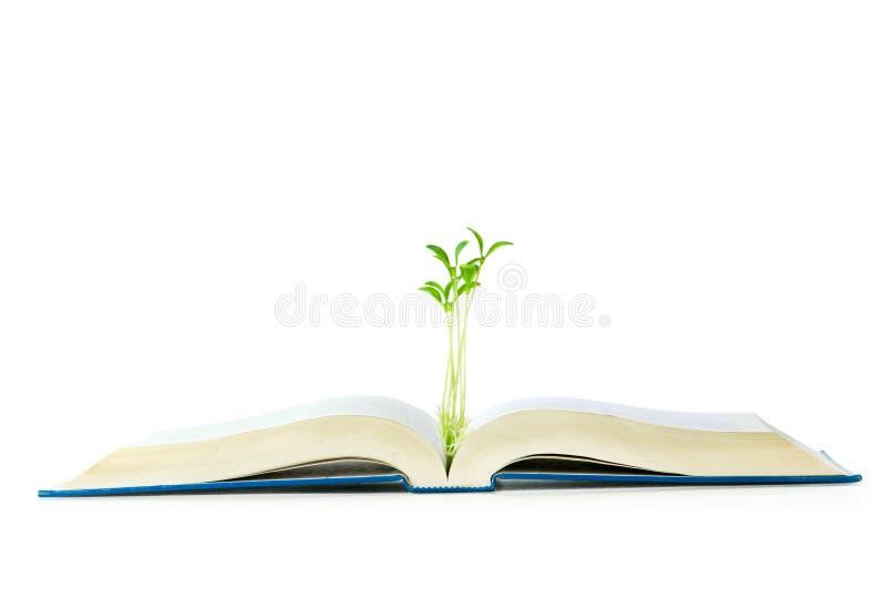 Wissenskonzept Mit Büchern Und Sämling Lizenzfreie Stockfotos