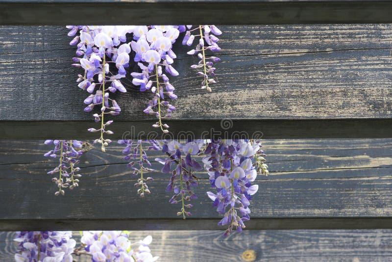 Download Wistaria pergola stock image. Image of garden, flowers - 40103577