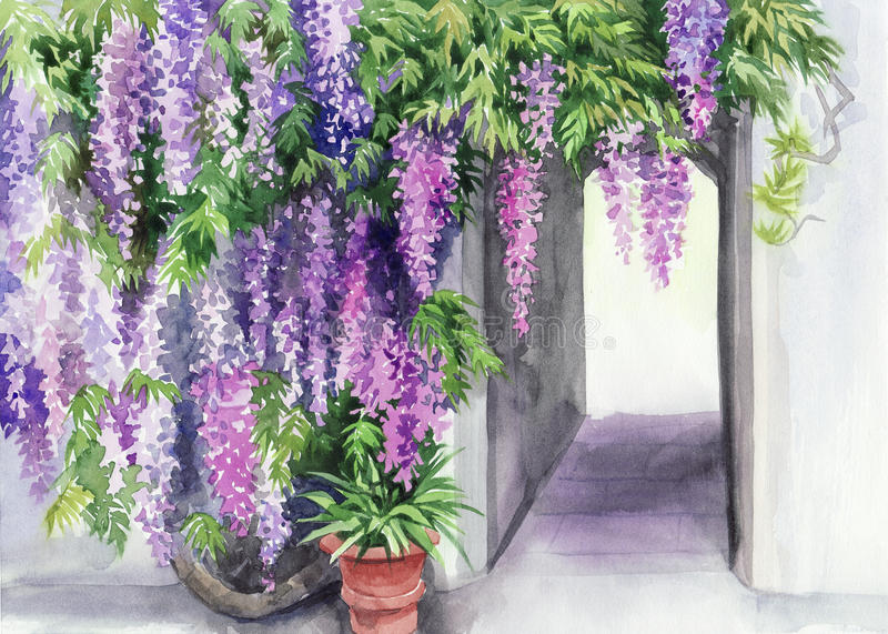Wisteria blossom royalty free illustration