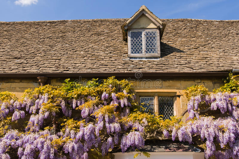 Wisteria on old country house stock photography