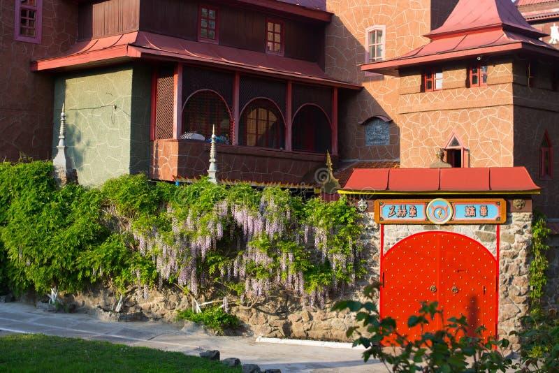 Wisteriablommor som hänger från en tjock kurvig filial royaltyfri fotografi
