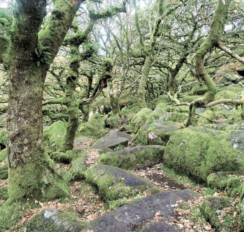 Wistmanshout in Devon - het meest achtervolgd? royalty-vrije stock afbeelding