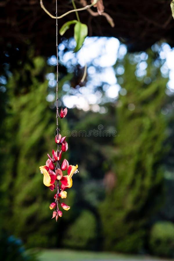 Wisząca czerwień i żółty kwiat z zielonymi sosnami jako tło zdjęcie stock