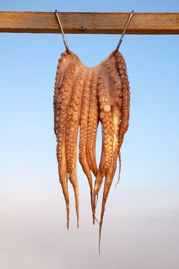 wisząca ośmiornica zdjęcia stock