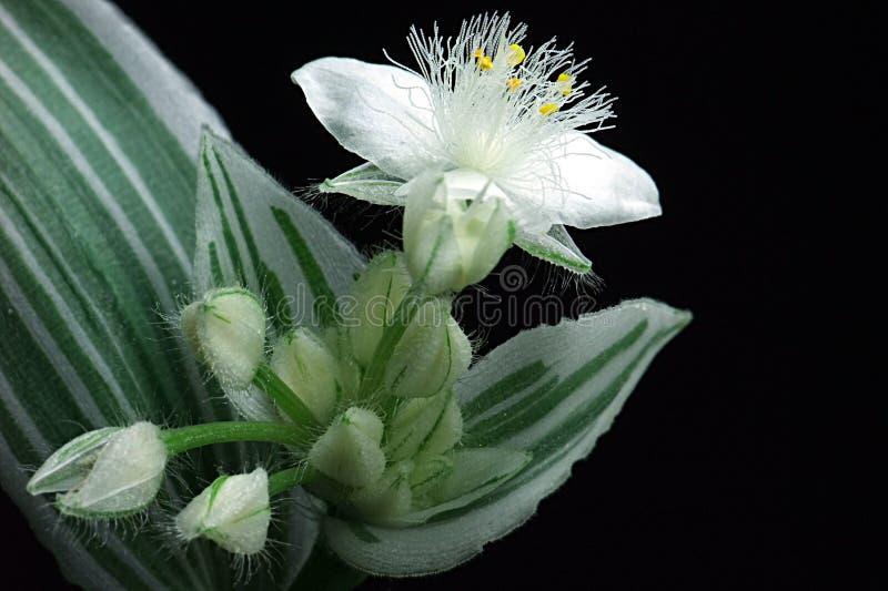 Wiszące orchidee fotografia stock