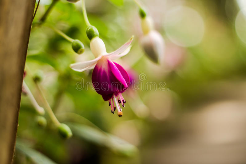 Wiszące orchidee obrazy royalty free