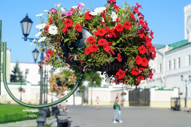 Wiszący kwiatu łóżko z czerwienią kwitnie petuni w Kazan Kremlin obrazy stock