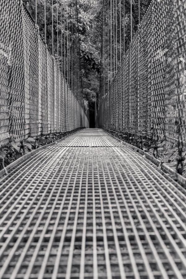 Wiszący most nad tropikalnym lasem deszczowym w Costa Rica fotografia royalty free
