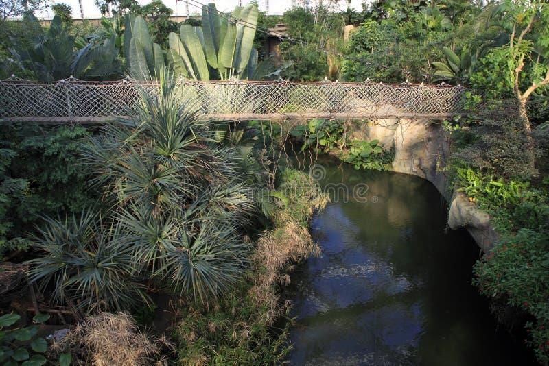 Wiszący most w tropikalnym lesie deszczowym obraz royalty free