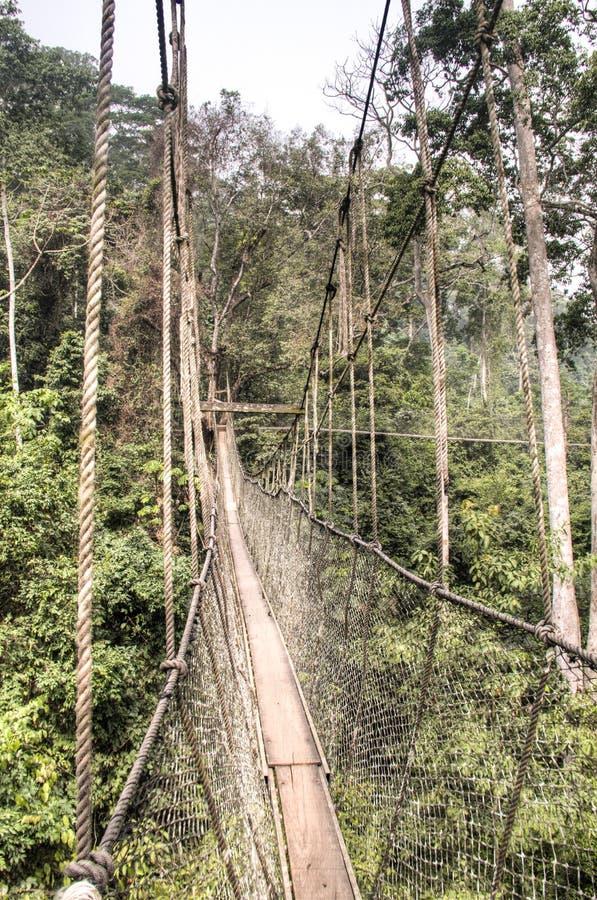 Wiszący mosty w Kakum, Ghana fotografia stock
